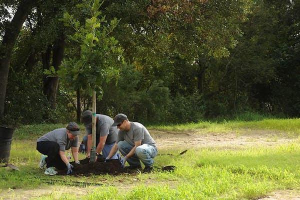 Jiffy Lube Employees Planting Trees